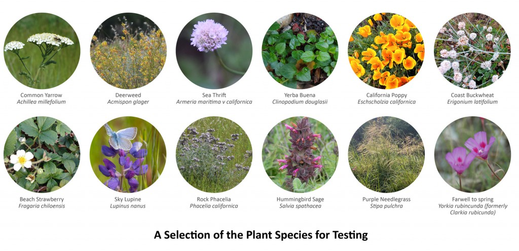 selection-of-plant-species